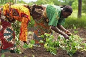 African-women-farmers-300x199